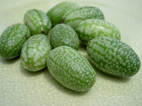 世界上最小的西瓜 想尝尝吗?(图)
