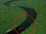 震惊世界神秘巨蛇现身马来西亚 奇闻趣事