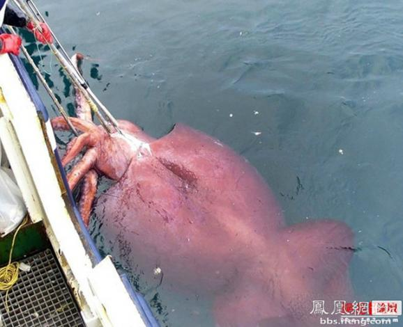 让人震惊的巨型鱼类 你见过几条(趣图)