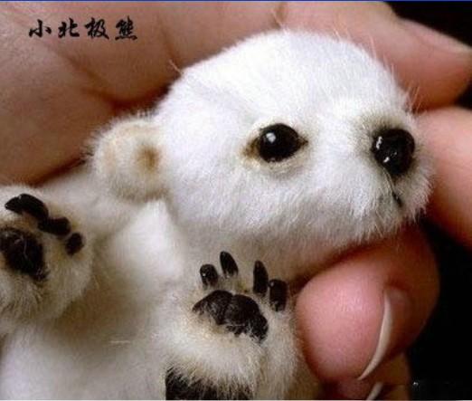 动物刚刚出生时候的萌样 你见过吗?(图)