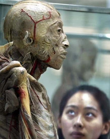 尸体博物馆 真人尸体加工现场 胆小勿入!